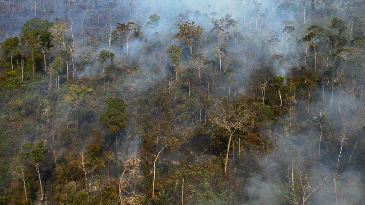 Une vue aérienne de la forêt amazonienne au Brésil, le 10 août 2020. (FLORIAN PLAUCHEUR / AFP)