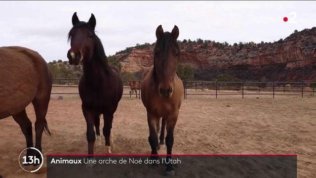 États-Unis : une arche de Noé en plein cœur de l'Utah