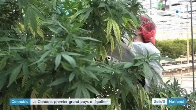 Le cannabis légalisé par le Canada