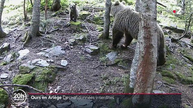 Ariège : les randonnées interdites à Ustou à cause des ours