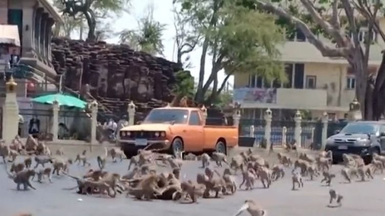 Des singes affamés se battent en Thaïlande (FRANCEINFO)