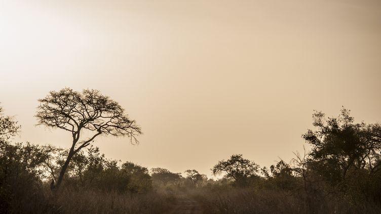 Le parc national de la Pendjari, dans le nord du Bénin, à la frontière du Burkina Faso, le 10 janvier 2018. (STEFAN HEUNIS / AFP)