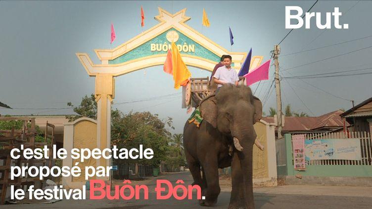 Au Vietnam, le festival Buon Don met en scène des éléphants capables de réaliser toutes sortes de numéros. Plusieurs ONG pointent les techniques de dressage employées. (BRUT)