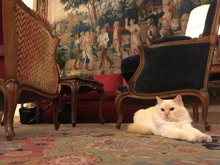 Pharaon, le chat-mascotte duBristol qui est revenu récemment dans le palace,début septembre 2020. (GREGOIRE LECALOT / RADIO FRANCE)