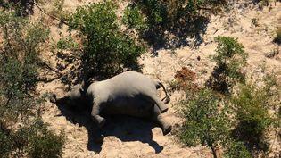 Début juillet 2020, les responsables du Parc National de l'Okanvango alertait sur la mortalité d'éléphants dans la zone du delta. Environ 400 pachydermes ont été retrouvés morts en quelques mois. (- / NATIONAL PARK RESCUE)