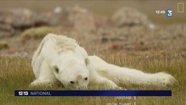 Climat : l'agonie d'un ours polaire interpelle