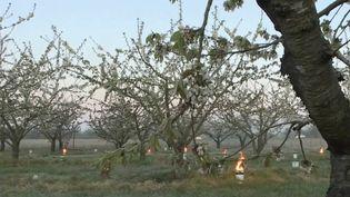 Avec le retour destempératures d'hiver, les agriculteurs doivent s'adapter pour éviter que les cultures ne gèlent. (CAPTURE ECRAN FRANCE 3)