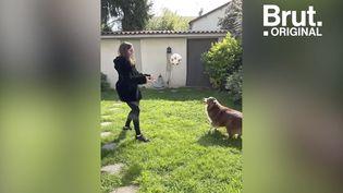 VIDEO. Chats et chiens, ces partenaires qui apportent du réconfort au quotidien (BRUT)