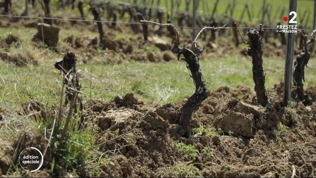 Coronavirus : l'inquiétude des viticulteurs