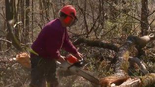 Depuis six mois à Besançon (Doubs), les arbres de la forêt sont abattus à la tronçonneuse à cause d'un champignon qui attaque les frênes sans leur laisser aucune chance. (FRANCE 2)