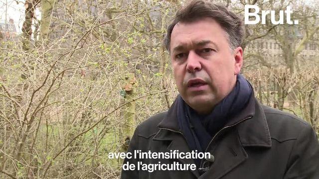 Les oiseaux se font de plus en plus rares en France mais pourquoi ?