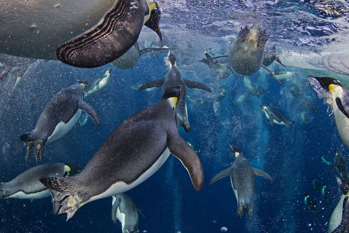 (PAUL NICKLEN / NATIONAL GEOGRAPHIC)