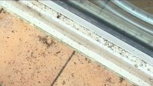 Un village des Pyrénées-Orientales a été envahi par de mystérieux insectes. (FRANCE 2)