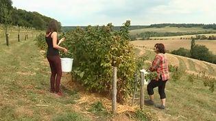 Zsofia et Anna, deux Hongroises, pratiquent le woofing en Bourgogne. (FRANCE 3)