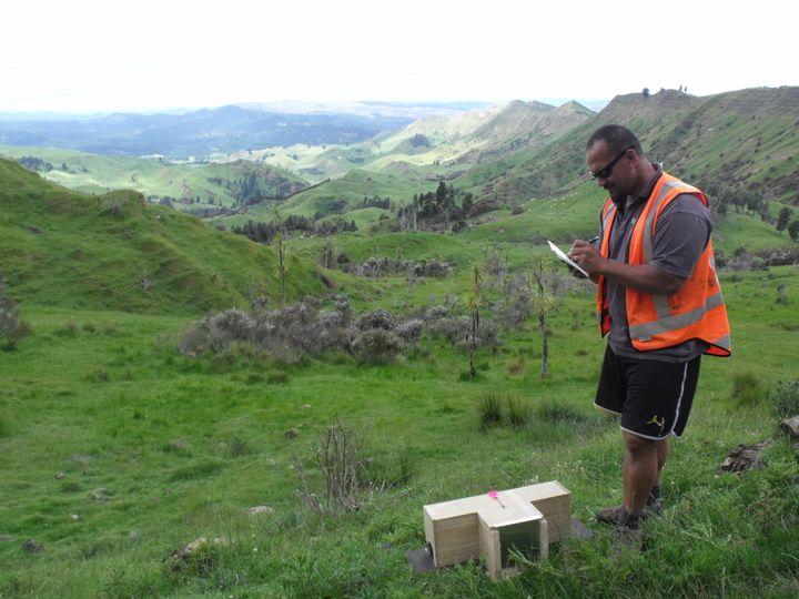 Des pièges sont installés dans la baie d'Hawke (Nouvelle-Zélande), afin de capturer les petits prédateurs. (CAPE TO CITY)