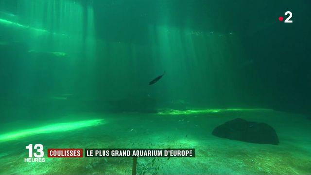 Boulogne-sur-Mer : Nausicaá, le plus grand aquarium d'Europe