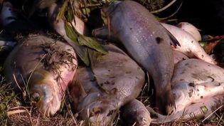 La fédération de pêche des Ardennes porte plainte contre le groupe Nestlé. Le week-end dernier, plusieurs milliers de poissons sont morts après une pollution de la rivière de l'Aisne. (FRANCE 3)