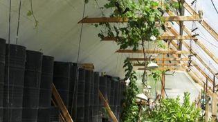Agriculture : des serres bioclimatiques qui se chauffent naturellement (France 3)