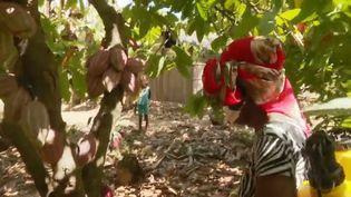 Feuilleton de France 2 sur l'île de Madagascar. (FRANCE 2)
