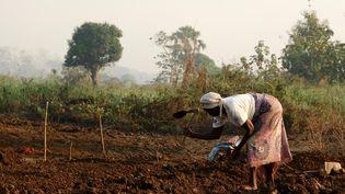 Dans le centre agropastoral installé au bord de la rivière Ouakka à Bambari, en Centrafrique, le 19 novembre 2020. (CAMILLE LAFFONT / AFP)