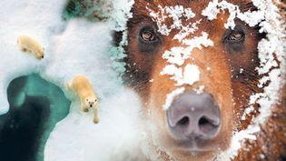 """Extrait de l'affiche de l'exposition """"Espèces d'ours""""  (Musée d'histoire naturelle )"""