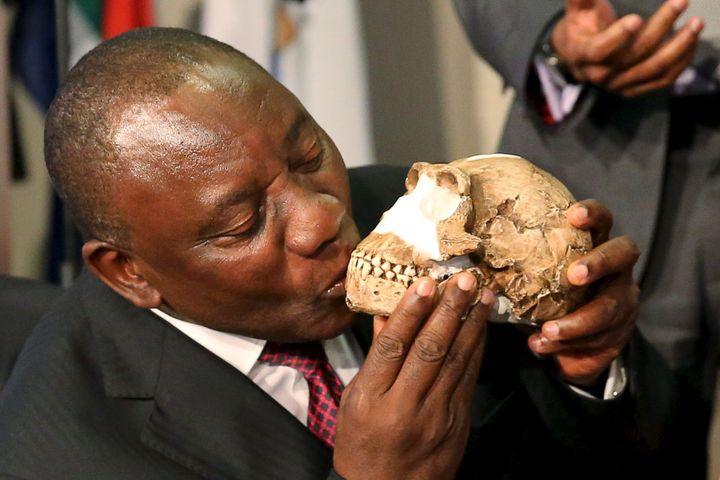 Cyril Ramaphosa (aujourd'hui président de l'Afrique du Sud), alors vice-président, embrasse le 10 septembre 2015 une réplique du crâne de Homo naledi, petit homme fossile vieux de «seulement» 300.000 ans (REUTERS/Siphiwe Sibeko)