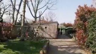 Beaucoup de zoos sont fermés et à Londres, au Royaume-Uni, du personnel s'est confiné avec les animaux pour prendre bien soin d'eux. (FRANCE 2)