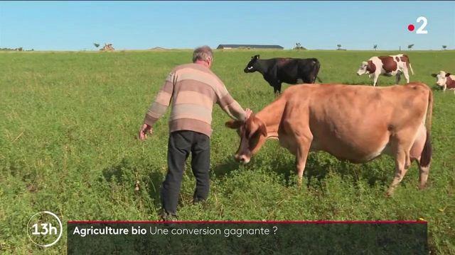 Agriculture : dix ans après sa conversion au bio, un producteur de lait triple son salaire