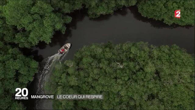 La mangrove, ce véritable poumon vert