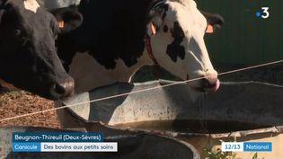 Dans un élevage des Deux-Sèvres, le propriétaire a pris des dispositions pour aider ses vaches laitières à supporter les fortes chaleurs. (FRANCE 3)