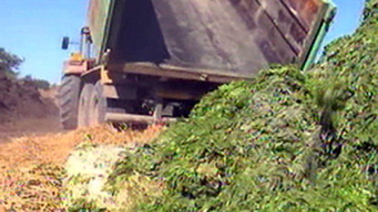 Les émanations gazeuses toxiques des algues vertes pourraient être liées à un décès fin juillet. (F2)