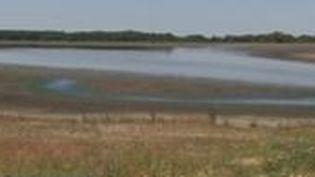 La canicule risque encore d'aggraver la sécheresse qui sévit en France. La situation est critique dans de nombreuses régions, mettant notamment en péril les poissons. (France 3)