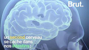 """VIDEO. """"Ce cerveau dans notre ventre, il a 200 millions de neurones"""" (BRUT)"""
