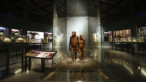 Installation artistique dans la galerie des origines de l'homme au Muséum américain d'histoire naturelle à New York (7 février 2007). Des êtres entre le singe et l'homme… (REUTERS - Shannon Stapleton )