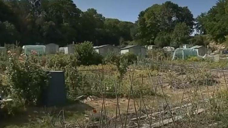 Sécheresse : restrictions d'eau dans le Val-de-Marne (FRANCE 3)