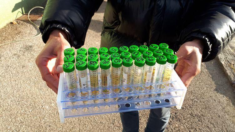 Des prélèvements d'urine effectués par l'association Campagne Glyphosate. (BENJAMIN MATHIEU / FRANCE-INFO)