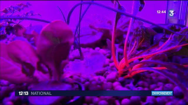 Aquaponie : à la rencontre des jardiniers des villes