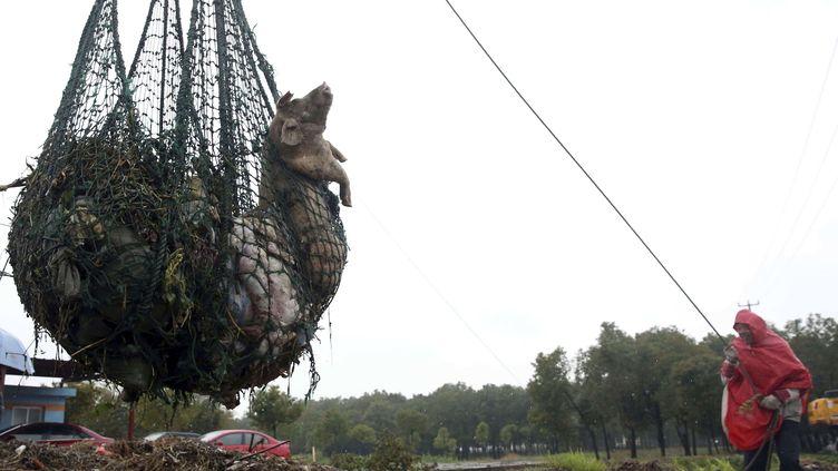 Le nombre de cadavres de porcs repêchés dans le principal fleuve de Shanghai (Chine) a dépassé les 13 000, selon les autorités locales, le 18 mars 2013. (AP / SIPA)