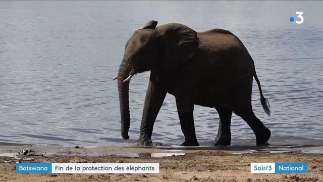 Botswana : fin de la protection des éléphants