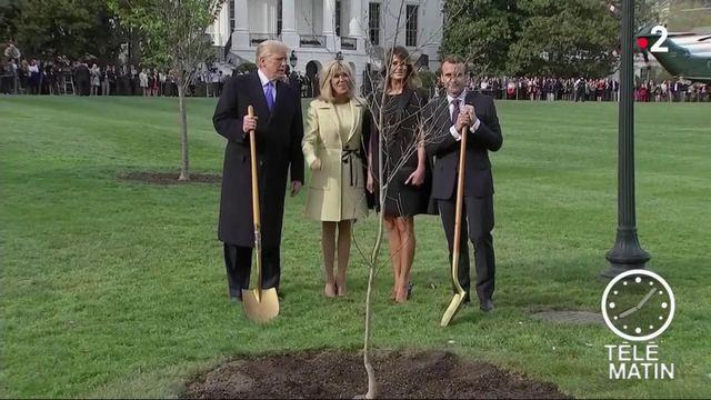 Où est passé le chêne offert par la France aux États-Unis ?