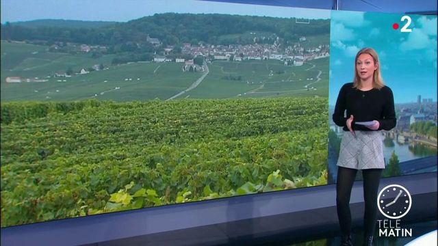 Champagne : Moët Hennessy décide de se passer des herbicides