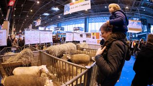 Des moutons au Salon de l'agriculture, à Paris, le 21 février 2015. (PATRICK KOVARIK / AFP)