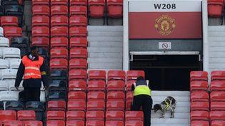 Un chien explore les tribunes du stade Old Trafford à Manchester (Royaume-Uni), après la découverte d'un colis suspect, le 15 mai 2016. (OLI SCARFF / AFP)