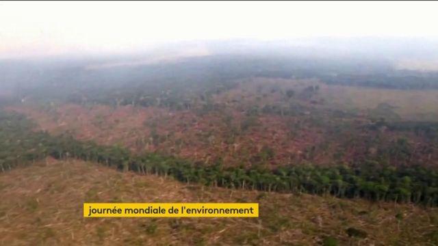 Environnement forêts ravagées