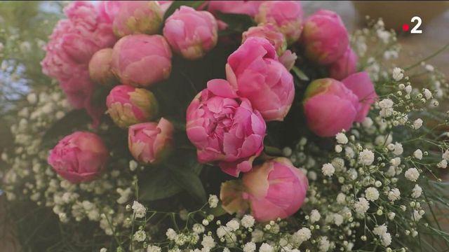 Fleurs : une hausse inédite du prix des pivoines