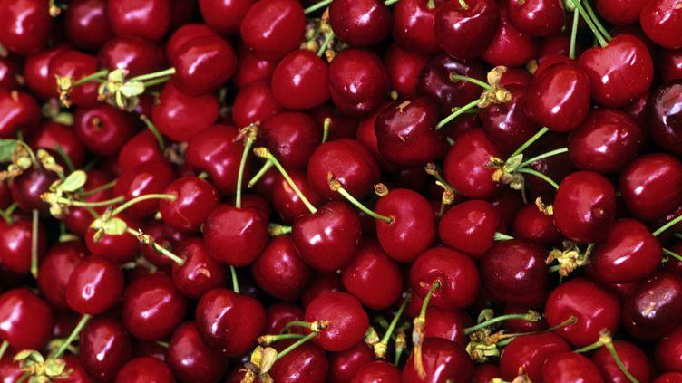 La France a confirmé, le 15 avril 2016, l'interdiction du diméthoate, un produit chimique utilisé pour traiter les cerisiers contre les insectes. (TRIPELON-JARRY / AFP)