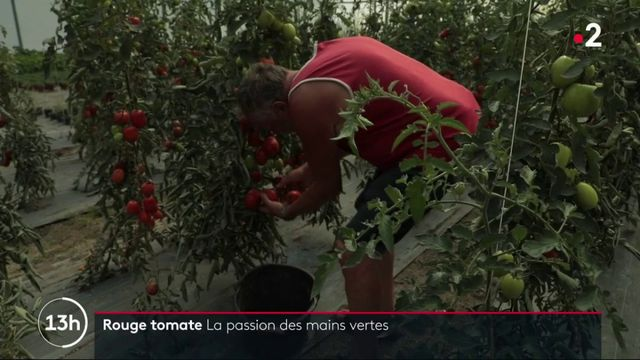 Feuillton : Rouge tomate (2/5)