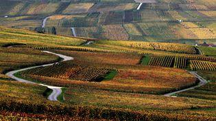 Des vignes de champagne près de Reims (Marne), le 25 octobre 2019 (photo d'illustration). (FRANCOIS NASCIMBENI / AFP)