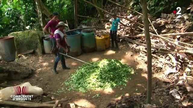 Complément d'enquête.  Ciment, essence, soude caustique... comment est fabriquée la cocaïne, dans la jungle colombienne