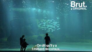 VIDEO. Dans les coulisses du plus grand aquarium d'Europe où on alerte sur l'impact de l'homme sur la vie sous-marine (BRUT)